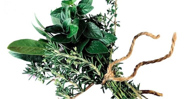 extratos vegetais naturais