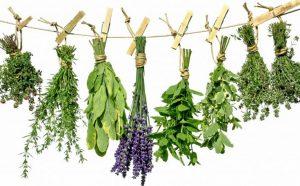 Lista de Extratos Vegetais